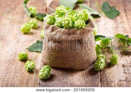 Fresh Green Hops In Sack