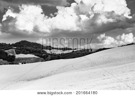Rural landscape at summertime along the road from Santa Maria della Versa to Carmine (Pavia Lombardy). Black and white