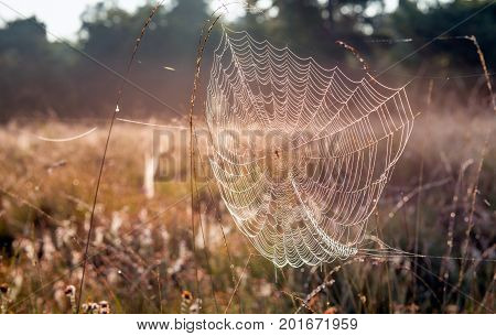 Closeup of a dewy spider web between stems of grasses on a sunny day early in the morning ov the summer season.