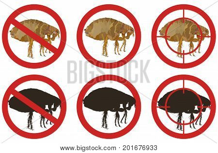 Warning stop signs with colorful detailed picture of a flea and its black silhouette inside red sign on white background. Fighting insect pests.