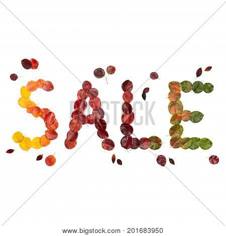 Autumn inscription Sale with orange, red, vinous, yellow and green leaves, isolated on the white square background