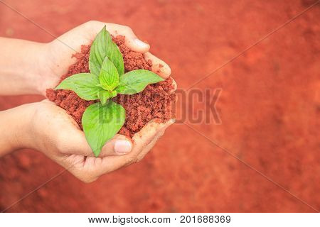 Hands Of People Holding Soil And Young Plant. Ecology And Growing Plant Concept