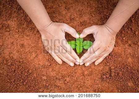 Hands Of People Protecting Young Plant On Red Soil. Ecology And Growing Plant Concept