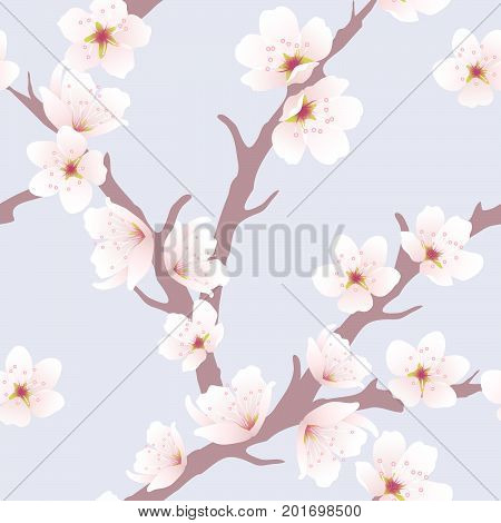 vector seamless floral background with cherry blossom pattern