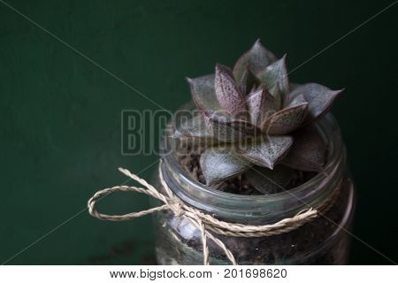 flower in a jar with rattan rope