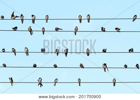Musical notes performed by birds on the wires , wildlife