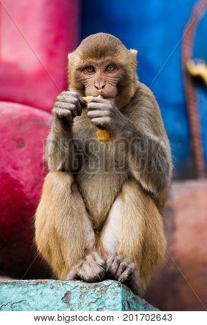 Monkey At The Swayambunath Temple, Kathmandu, Nepal