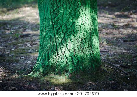 colorful forest with tree bark painted in many colors