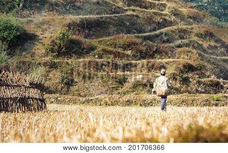 Farmer On The Rice Fields On The Annapurna Base Camp Trek, Nepal