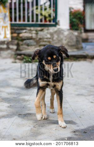 A Dog In A Village On The Annapurna Base Camp Trek, Nepal