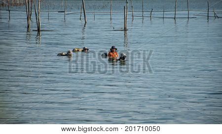 Yo Island Songkhla Thailand - September 4 2016 : This fisherman womans Find shrimp in Songkhla Lake