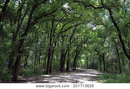 Scenic trail in Mayfield park, Austin, Texas