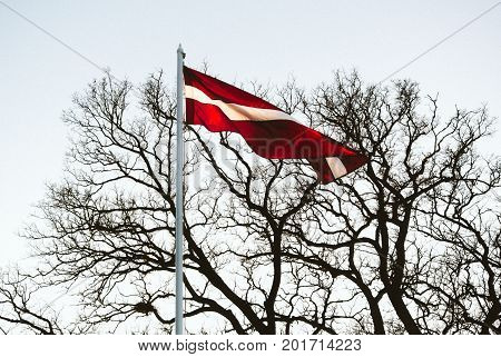 Latvian flag waving in the sky and tree