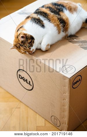 PARIS FRANCE - AUG6: Cat sleeping on the new Dell Computer workstation cardboard box delivered by courier and left by the door