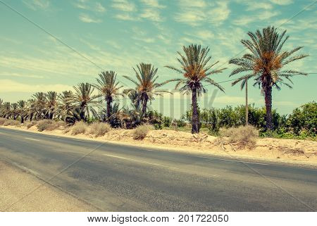 Empty asphalt road in the middle of the oasis in the red-hot desert