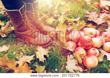 farming, season, gardening, harvesting and people concept - woman feet in boots with apples and autumn leaves