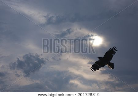 Super interesting patterns of clouds adorn this photo of a black bird flying across a full moon in winter-like weather.