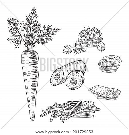 Carrot hand drawn vector illustration set. Isolated Vegetable engraved style object with sliced pieces. Detailed vegetarian food drawing. Farm market product. Great for menu, label, icon