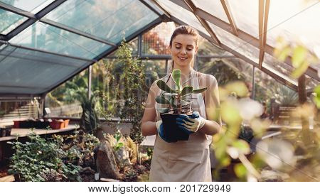 Woman Working At A Cactus Garden