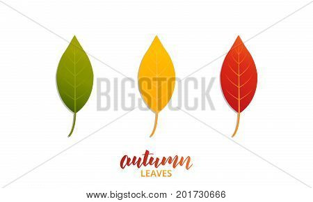 Autumn leaves. Vector leaves of trendy Fall colors
