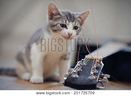 The curious kitten plays with a guitar string.