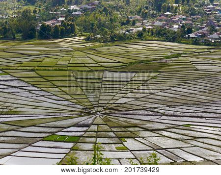 View from above of unique Spider's Web Rice Fields on the Indonesian island of Flores.The shape is used traditionally to divide land fairly amongst families and symbolises harmony