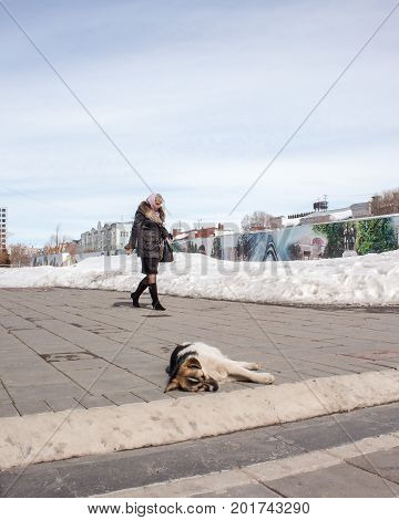 Orenburg, Russia, March 28, 2010. Spring. Sunny Day. A Homeless Dog Is Basking In The Sun On The Bac