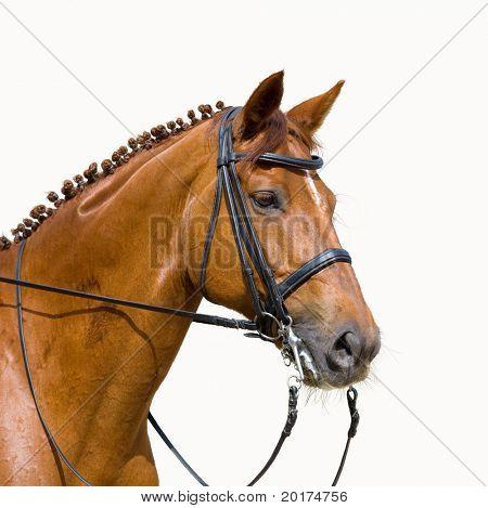 dressage, chesnut horse - isolated on white