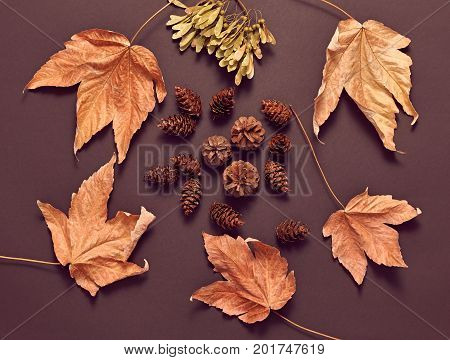 Autumn Fashion Fall Leaves Background. Vintage. Design. Fall Leaves and Pine Cone. Trendy fashion Stylish Concept. Autumn Vintage