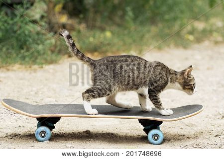 Aspiration to victory Young cat on the skateboard