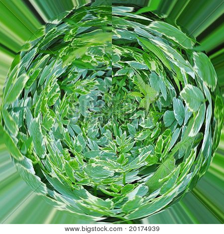 Perenial plants globe like effect
