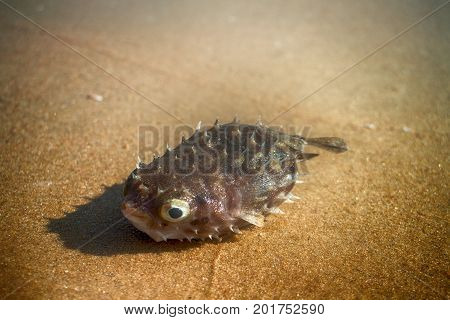 Out By Sea On Beach Of Tropical Fish Of Amazing Shapes And Species