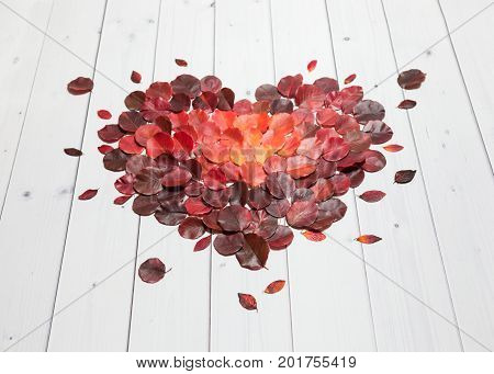 Autumn heart from bright red, vinous and orange leaves lying flat on the white wooden background, perspective side view.