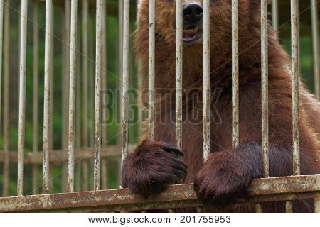 Brown bear in the shelter for homeless animals
