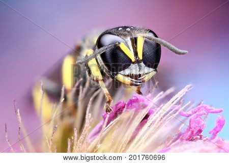 Great beautiful color photography from insect rise