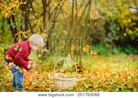 Little Boy Playing In Autumn Park/forest