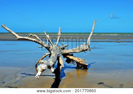 Tree trunk on the beach. A dry trunk in the sand of the beach during low tide in Porto Seguro, Bahia, Brazil.