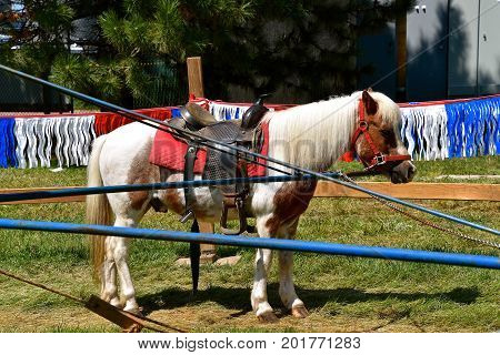 A pony with a saddle is attached to an arm of a carrousel for children to receive rides as a festival.