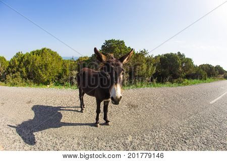 Wild donkey in nature in Cyprus. Wild nature