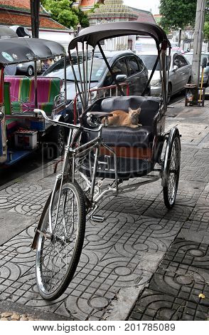 Famous three wheeled taxi in Thailand - tuk tuk motorcycle. CNG powered machine. A red cat is sitting in the tuktuk.