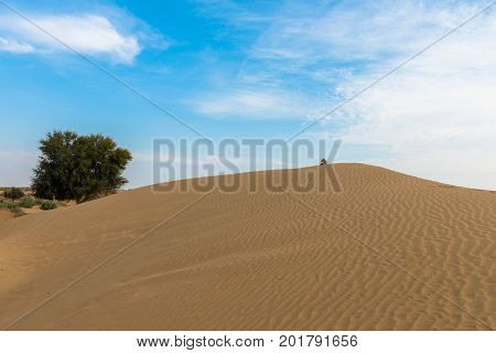 Wide angle picture of sand dunes in Thar Desert located close to Jaisalmer the Golden City in India.