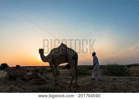 JAISALMER RAJASTHAN INDIA - MARCH 07 2016: Horizontal picture of camel silhouette with native man during sunset time in Thar Desert located close to Jaisalmer the Golden City in India.