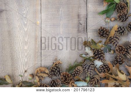 Soft Wooden Background With Acorns, Pine Cones, Needles And Leaves On Right And Bottom Border