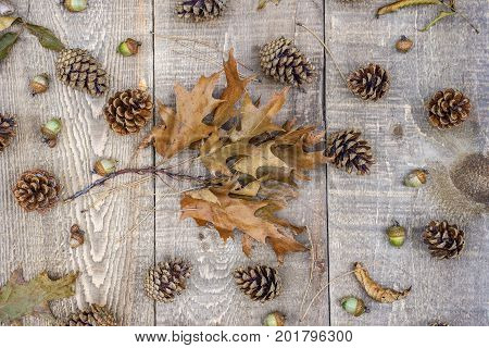 Oak Leaf Branches, Pine Cones, Needles And Acorns On Rustic Wood Plank Background