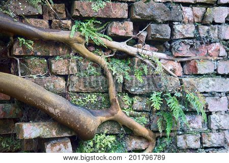 Tree Grew Out Of Brickwork