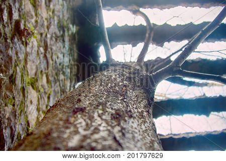 Tree Growing Through Massive Concrete Grid