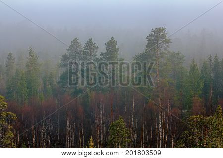Misty Spring Morning Forest In May