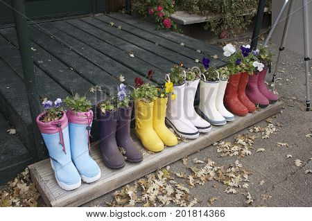 Seven pairs of rain boots are lined up on a step with flowers growing in each one. They are of all colors. Dry leaves are all around them.