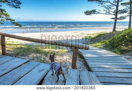 Holiday at sandy beach of the Baltic Sea, Europe
