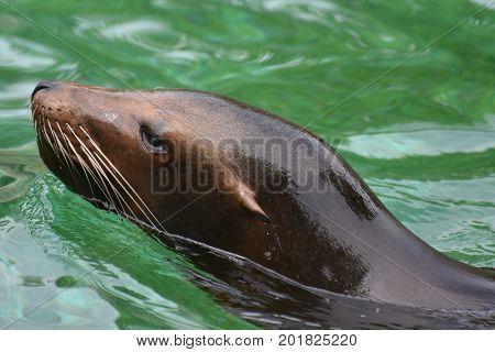 Adorable Close Up of a Sea Lion Head